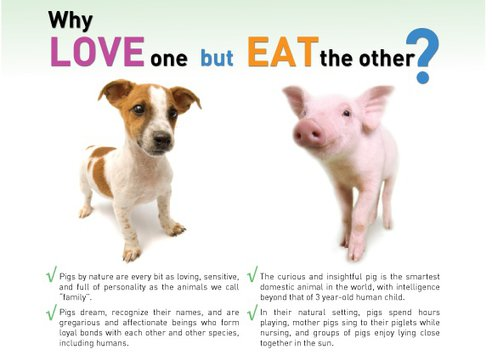 Why We Should Eat Ethical Food